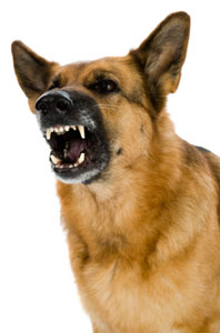 A Dog aggression – it is our responsibility to prevent it